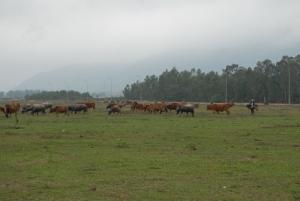 Khung cảnh hoang tàn và thành bãi thả bò của KCN Hoàng Mai.