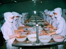 Nếu bị tăng thuế suất, tôm Việt Nam sẽ gặp nhiều khó khăn khi vào thị trường Mỹ Ảnh: DUY NHÂN