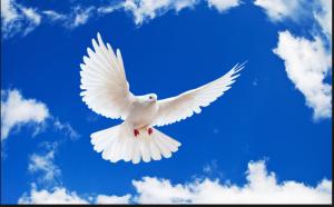Chim bồ câu là biểu tượng của khát vọng hòa bình, tự do (ảnh minh họa)
