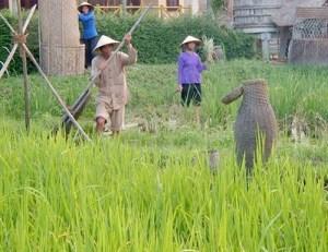 Người dân ở nhiều địa phương vẫn thường gặp cảnh đói kỳ giáp hạt  -  Ảnh: H.X.Huỳnh