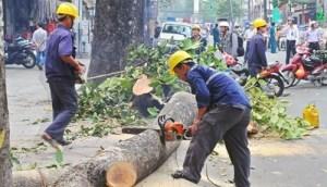 Vụ chặt hạ thay thế cây xanh gây nhiều bức xúc cho người dân Thủ đô. ảnh: hà nội mới.