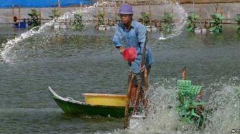 Tại vùng đồng bằng sông Cửu long, hạn hán gây ra tình trạng ngập mặn, gây thiệt hại cho mùa màng và làm tăng độ mặn của nguồn cung cấp nước sinh hoạt. Photo: AFP