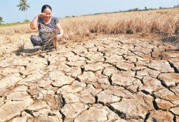 Nông dân Kiên Giang khóc ròng trên đồng ruộng hạn hán. Ảnh: báo Nhân Dân