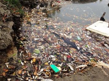 Cá chết hàng loạt ở cửa biển Lạch Giang, xã Lộc Vĩnh, H.Phú Lộc, tỉnh Thừa Thiên-Huế Ảnh: Thành Quang/ TN