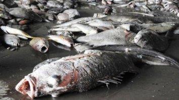 Cá chết trắng biển từ Hà Tĩnh, Quảng Bình đến Quảng Trị, Thừa Thiên-Huế. (Hình: Tuổi Trẻ)