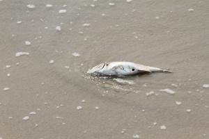Mẫu nước biển kiểm tra ở Đà Nẵng không phát hiện thấy yếu tố bất thường. Ảnh: DT
