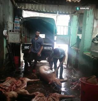 """Lợn chết được người của """"ông trùm"""" mổ """"làm sạch"""" rồi bán về Hà Nội và vùng phụ cận. Ảnh: Shoha"""