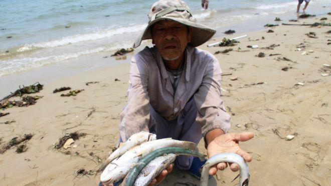 Cá chết hàng loạt ở miền Trung đã làm người dân gặp điêu đứng. Ảnh: internet