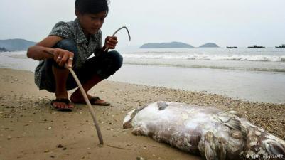 Một con cá lớn nằm chết trên bãi biển. Nguồn: Getty images/ AFP