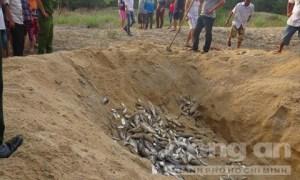 Tiêu hủy cá chết ở thị trấn Thuận An, huyện Phú Vang, Thừa Thiên – Huế- Ảnh: Hoàng Quân