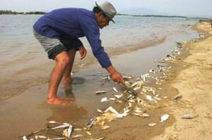 Người dân miền Trung thiệt hại nặng vì cá chết hàng loạt. Ảnh: ANTĐ