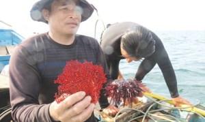 Hiện vật cú lặn thứ 3 là cây san hô đỏ bị chết. Ảnh: TP