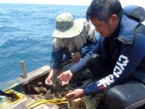 Các thợ lặn cho biết cá chết xếp lớp dưới đáy biển. Ảnh: Vietnamnet