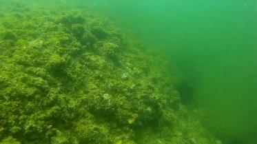 Cận cảnh dưới đáy biển ở bãi Bến Cá (Nhân Trạch, Quảng Bình) - ảnh cắt từ clip