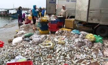 Ngư dân phải mất nhiều công sức thu dọn cá chết để làm sạch môi trường. Ảnh: internet