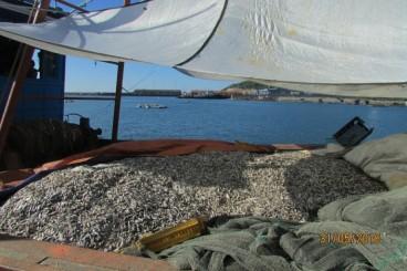 30 tấn cá mu được đánh bắt xa bờ của ông Trần Việt Hoa thuộc xóm 3, Thôn Đông Yên, xã Kỳ Lợi, huyện Kỳ Anh, tỉnh Hà Tĩnh cập cảng Vũng Áng vào ngày 30.05 với hy vọng bán được giá cao. Ảnh: TMCNN