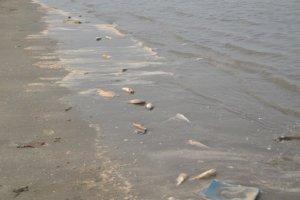 Cá chết kéo dài trên nhiều km dọc bờ biển Diễn Châu và thị xã Hoàng Mai (Nghệ An). Ảnh chụp trưa 12/5. Ảnh: Vietnamnet