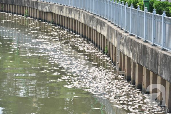 https://anhbasam.files.wordpress.com/2016/06/h149.jpg