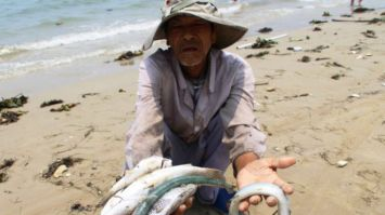 Cá chết ở miền Trung Việt Nam đang là chủ đề nóng trên báo chí và tại Quốc hội Đài Loan. Ảnh: BBC