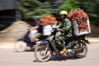 Một người chở trái vải trên một xe gắn máy  trên đường ở Lục Ngạn, Việt Nam, ngày 22-6-2016. (Ảnh: AAP).