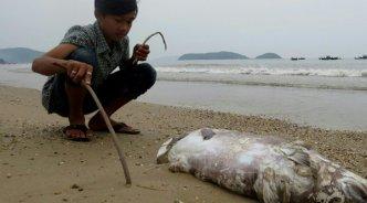 Sau 3 tháng biển bị nhiễm độc, nhà cầm quyền CSVN mới công bố nguyên nhân làm cá chết. (Hình: Getty Images)