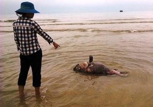 Làm cá chết hàng loạt, Formosa bồi thường 500 triệu USD. Ảnh: GDVN