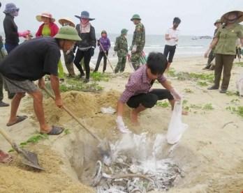 Chôn lấp cá chết tấp vào bờ biển miền Trung hồi tháng 4 vừa qua. (Hình: TTXVN)