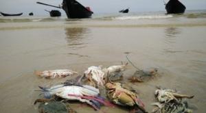Hiện tượng cua ghẹ chết ở biển Vũng Áng. Ảnh: MTG