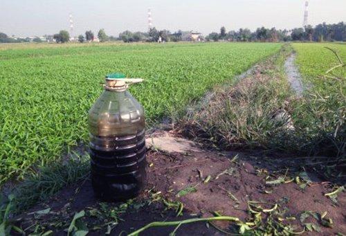 Bình nhớt thải dùng tưới rau muống ở huyện Củ Chi, Sài Gòn. (Hình: VnExpress)