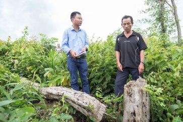 Ông Vừ Dũ Dinh chỉ cho phóng viên Báo Người Lao Động thân cây mà phóng viên chương trình Chuyển động 24h bảo ông đốn hạ để quay phim Ảnh: NHƯ PHÚ