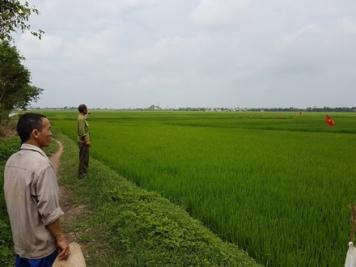 """Mập mờ dự án """"bán"""" 30ha đất nông nghiệp cho doanh nghiệp Trung Quốc. Ảnh: báo DT"""