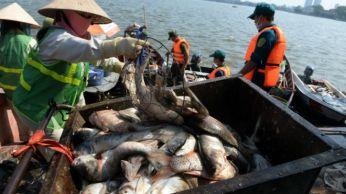 Các lực lượng thu gom cá chết trên Hồ Tây ngày 3/10. Ảnh: AFP.