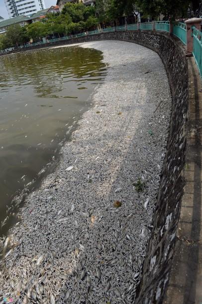 Hình ảnh cá chết nổi trăng mặt nước hồ Tây tại khu vực gần đường Trích Sài và Nguyễn Đình Thi (quận Tây Hồ) sáng 2/10. Ảnh: Zing