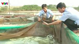 Vụ cá chết hàng loạt ven biển 4 tỉnh từ Hà Tĩnh đến Thừa Thiên-Huế đã làm tê liệt các hoạt động ngư nghiệp của các tỉnh. Ảnh tư liệu/ AP