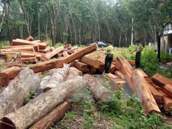 Rừng và đất rừng ở Đắk Lắk vẫn bị chặt phá, lấn chiếm trái phép. Nguồn: TTXVN