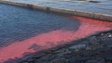 Dải nước đỏ lạ xuất hiện ở vùng biển Vũng Áng. Ảnh: VNN